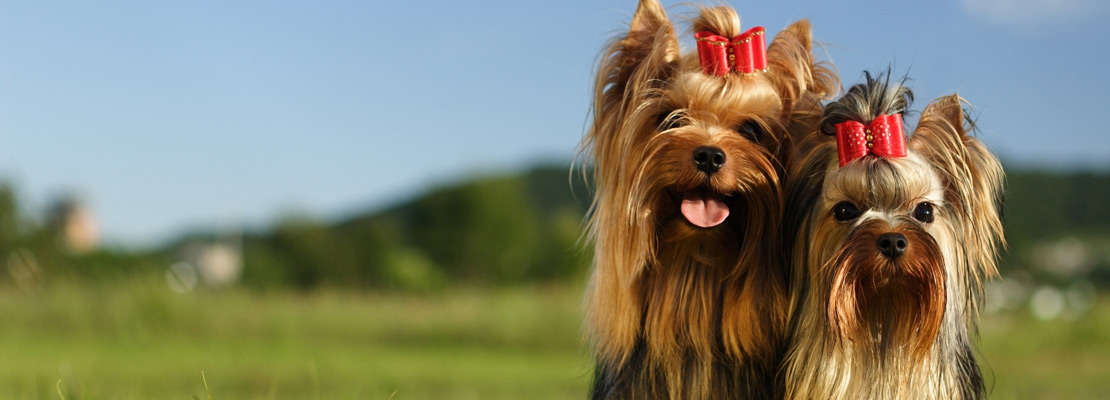 dog grooming blackpool dog groomer vip dog grooming